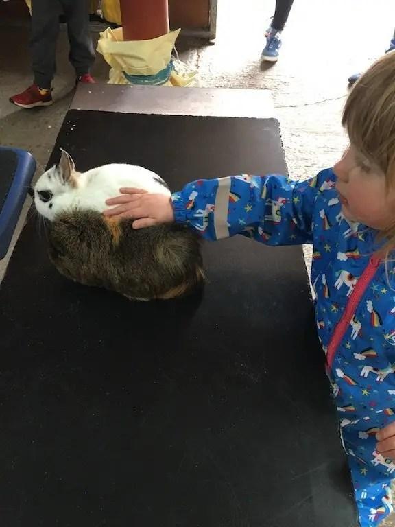Cannon Hall Farm - petting barn
