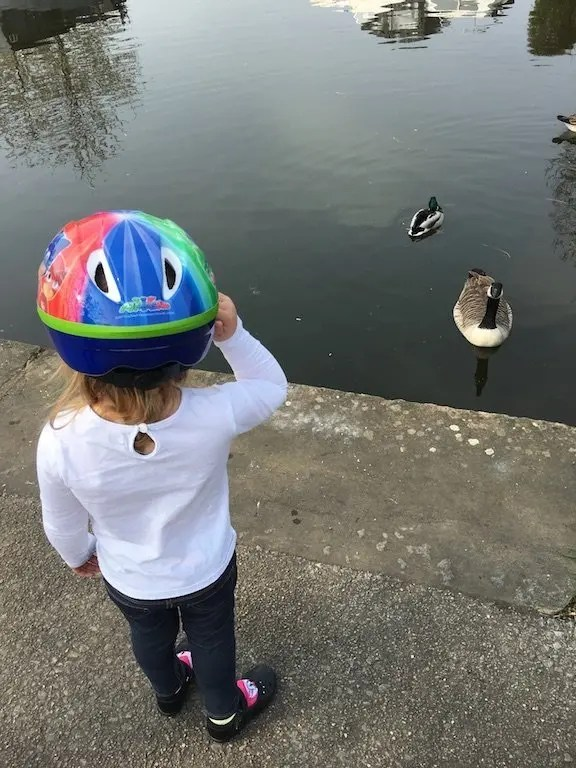 A Walk Along The Leeds-Liverpool Canal - ducks and geese