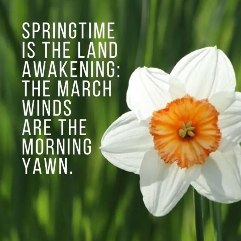 Spring Quotes To Uplift And Inspire