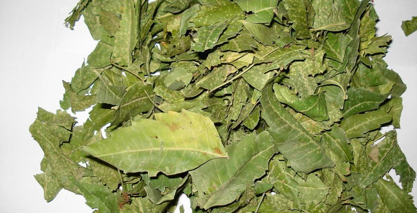 Uses Of Neem Leaves