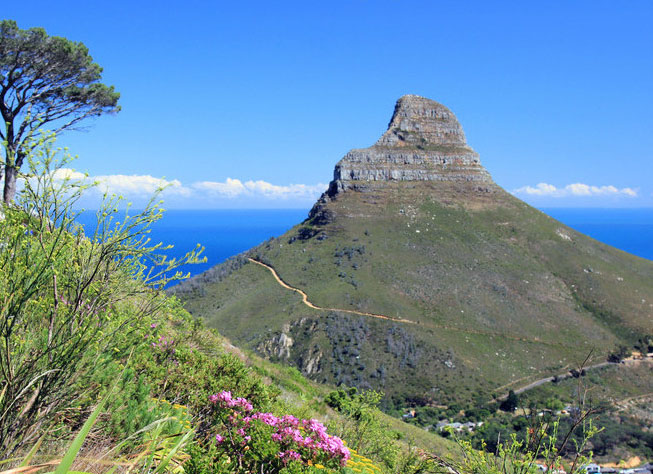 Image result for climbing lion's head cape town