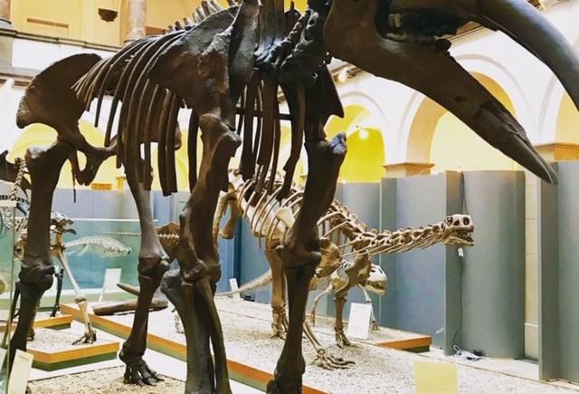 Paläontologische Museum