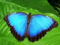 ebende Schmetterlingsausstellung im Botanischen Garten