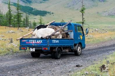 Tiertransporter