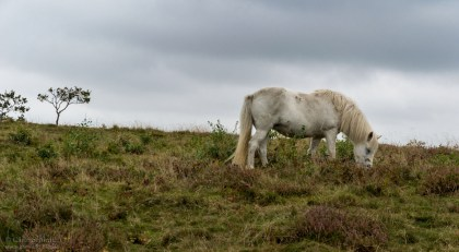 Pferde in den Mols
