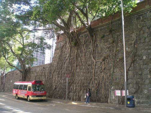 hong kong wall trees
