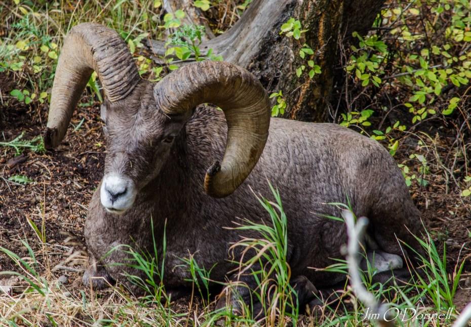 Wildlife conservation tourism