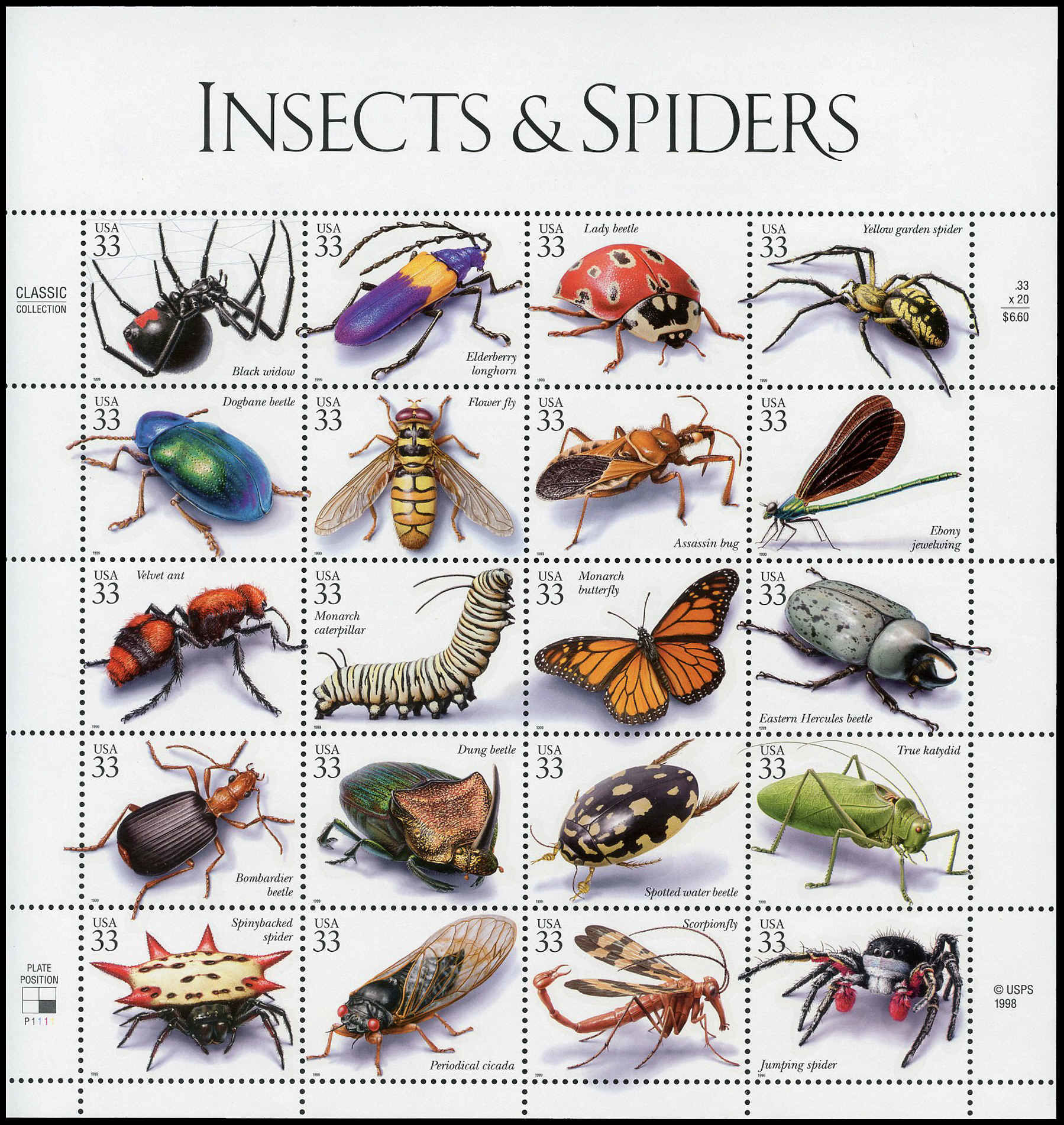 Buy United States Insects And Spiders