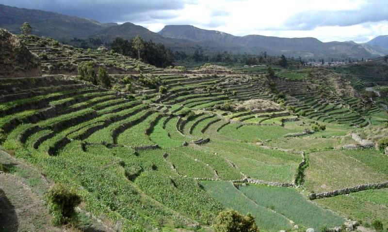 Buscan recuperar y rehabilitar andenes en once regiones del Perú