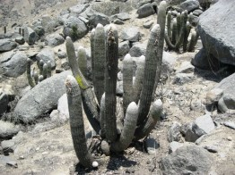 cerro-campana-caminata-111