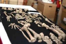 chavin-de-huantar-hallazgo-agosto-2018-restos-humanos