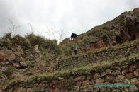 pisac-torreones-trekking-64