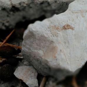 Fósiles de concha