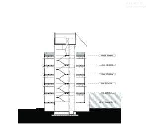 Palmito - ZD+A / Corte Transversal