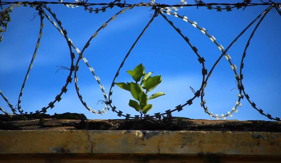 Transferencias de Prisiones