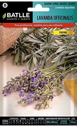 Battle  Semi Aromatici Lavanda Officinalis Semi  40Cm