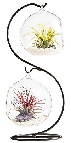 Mkouo Air terrario fioriera a forma di vaso globo contenitore vaso decorativo artificiale succulente display vaso portacandela con supporto in metallo nero1Globe clear m