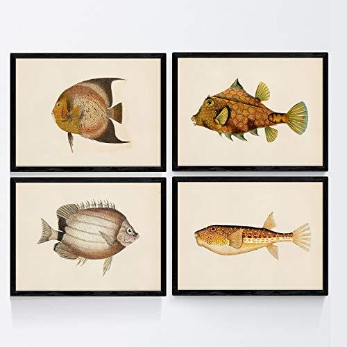 Nacnic Set di 4 Piatti con Pesci Colorati Effetto Vintage Tono Giallo Marrone Wahai 4 Composizione Pesci Diversi A4 Sfondo dEpoca Vecchia Carta Poster di Carta da