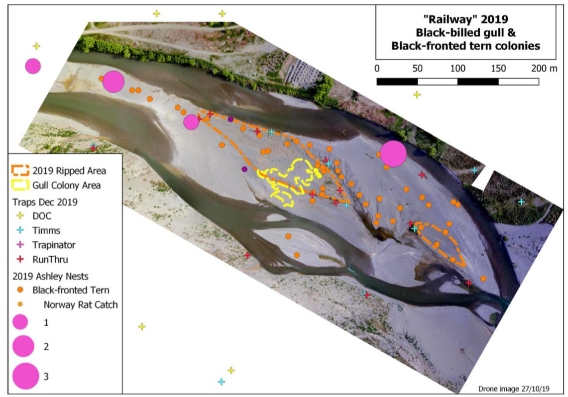 ashley river bird colonies 2019