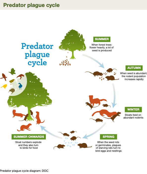 predatorplaguecycle