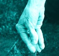 Makna Ungkapan Panjang Tangan