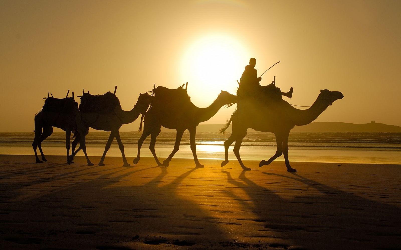 Benci Arab Sama Dengan Benci Islam