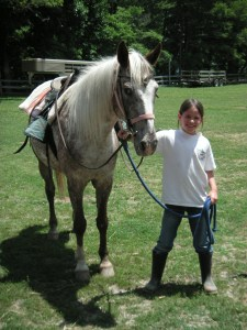 Learn how to lead a horse