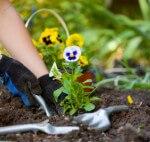 safe gardening tips edison nj