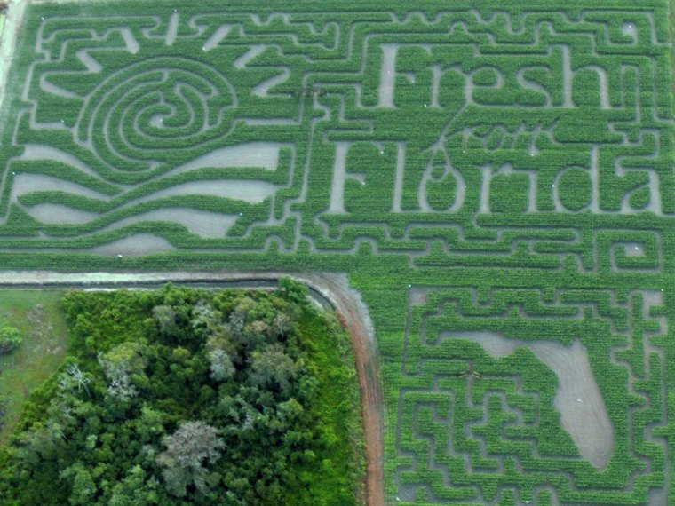 Eat Fresh from Florida in the Winter Months