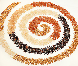 Photo: A spiral of different color rices.  Link to photo information