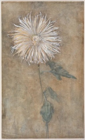 watercolour and charcoal drawing of a white chrysanthemum by Piet Mondrian.