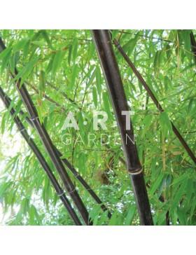 pepiniere en ligne bambous a prix