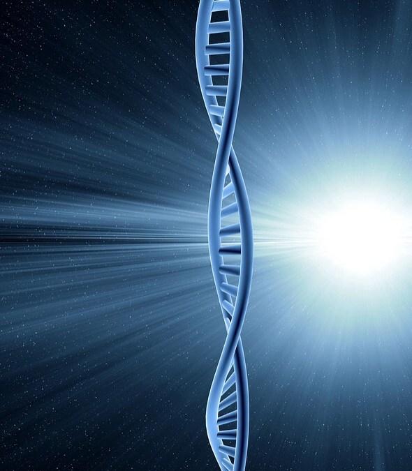 Une identification des intelligences multiples inhérentes à chacun
