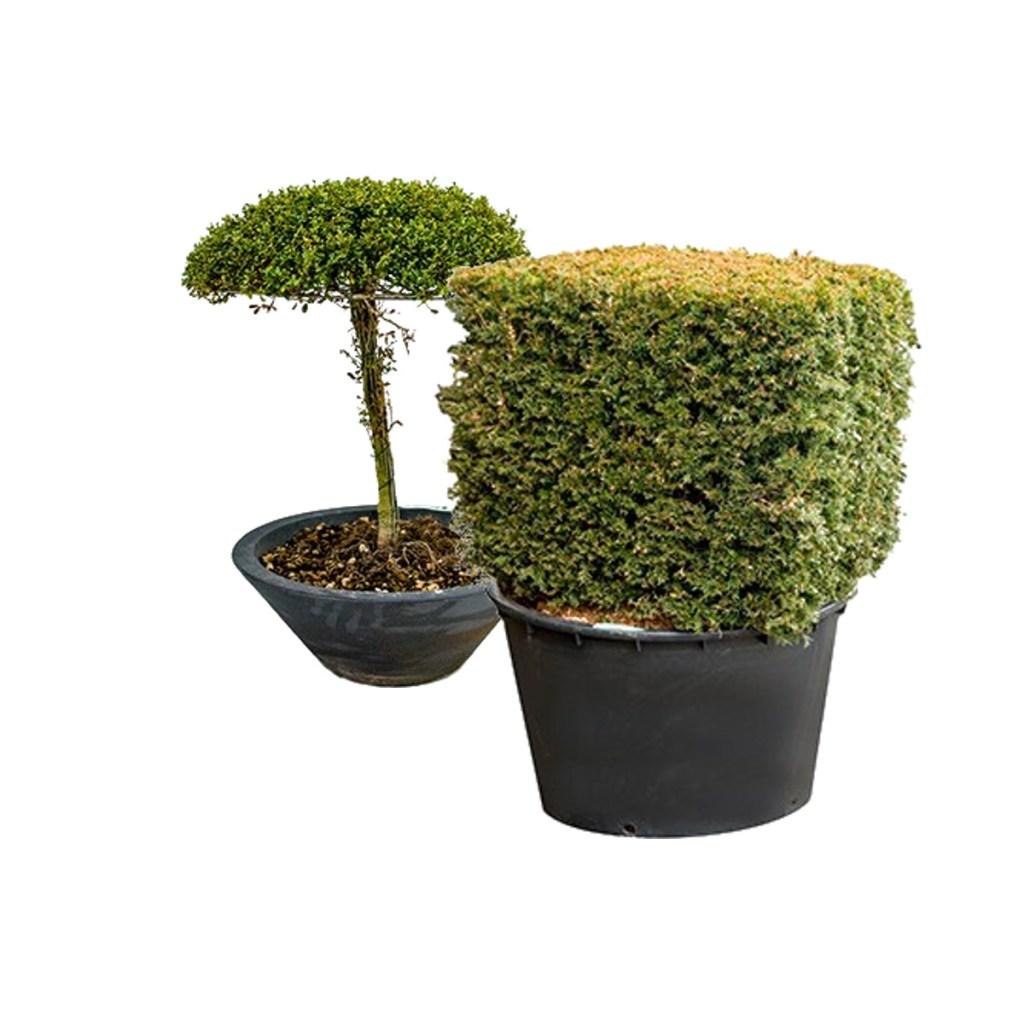 Vente de diverse formes de plantes