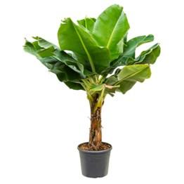 Plantes méditérranéennes et plantes d'intérieur