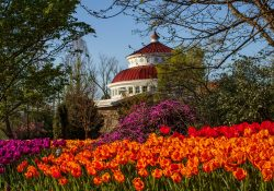 A photograph of tulips at the Cincinnati Zoo