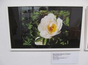26. Art Senses näitus Pärnus