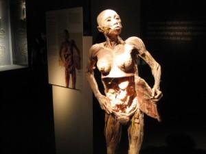 corpohumano1