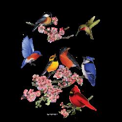 SONGBIRDS OF AMERICA