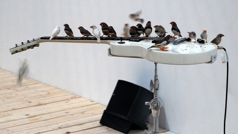 Image- Numerous Zebra finches on the electric guitar play music while others fly away