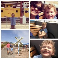 Favorite Moments From The Week   Wordless Wednesday