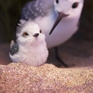 Piper | The Adorable Pixar Short in Front of Finding Dory