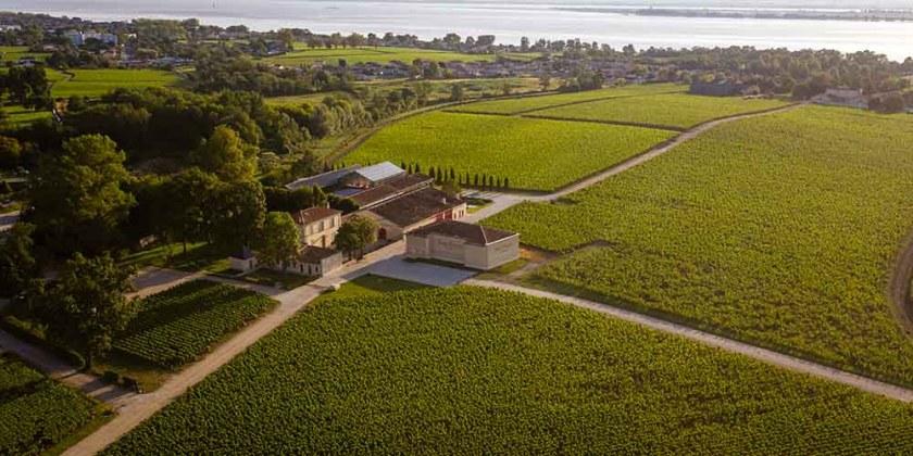 Chateau Haut Bages Liberal vinyards