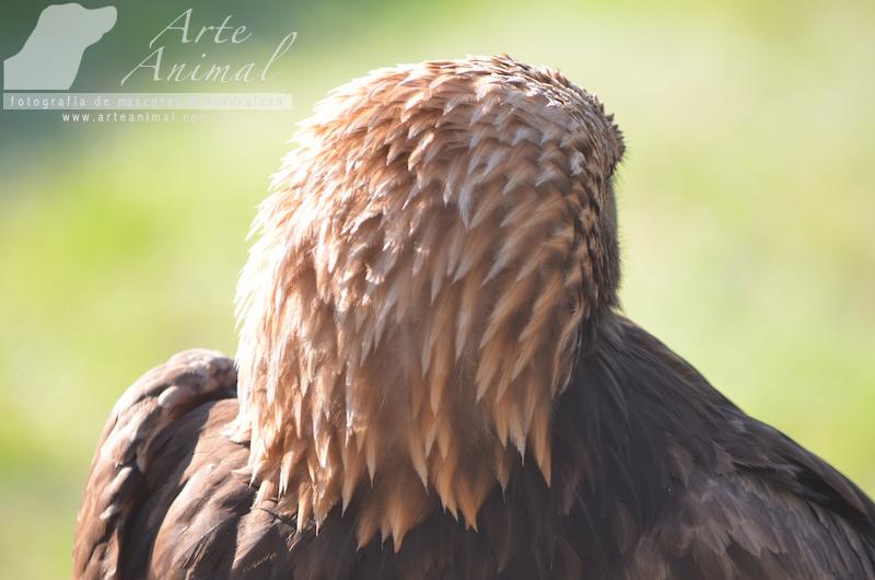 arte animal