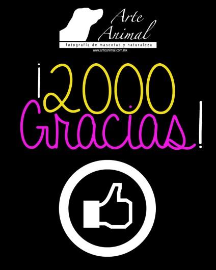 2000 gracias