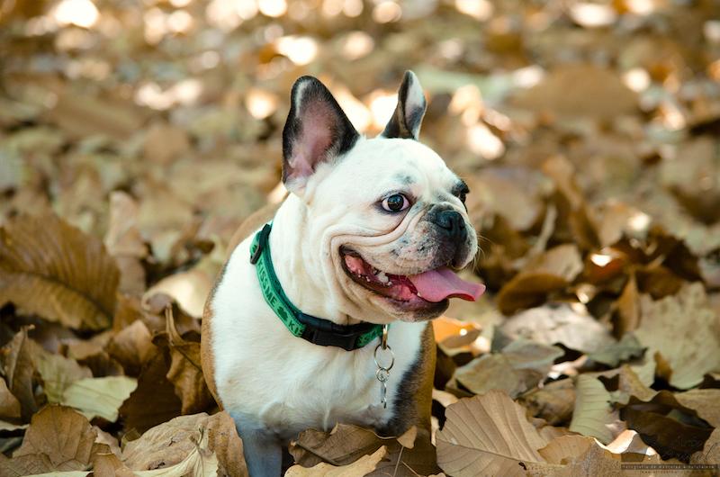 Cachorro lleno ternura - Arte Animal Fotografía