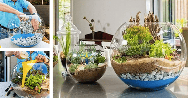 Como fazer um terrário ou jardim em miniatura