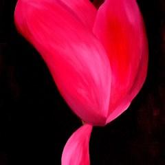 """Absi Grace, """"Cyclamen 2"""" original oil on canvas"""