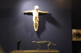 le cabinet de curiosité du stand de la galerie Da-end