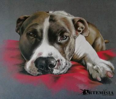 Ice - Pet Portrait - Soft pastel on paper 30x40